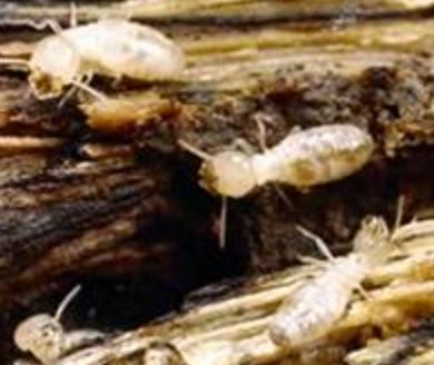 Termite Training Course